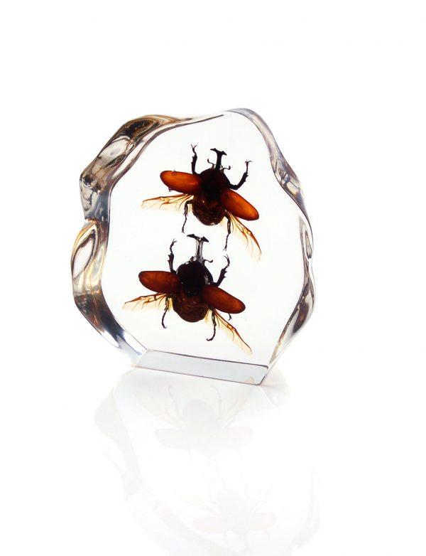 Настольный сувенир «Жуки - единороги в стекле»
