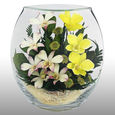 Орхидеи в стекле - цветы для джентльмена