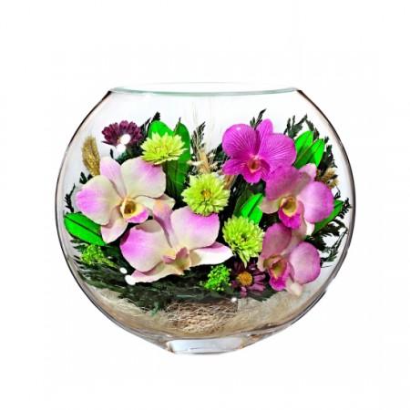 Орхидеи в стекле «Милашка»