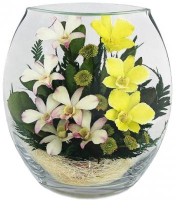 Цветы в стекле «Жёлто-белые орхидеи»
