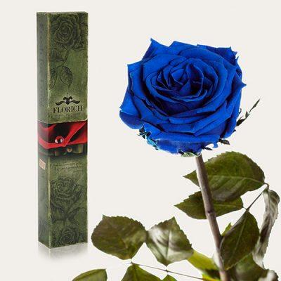 Долгосвежая роза «Синий Сапфир»
