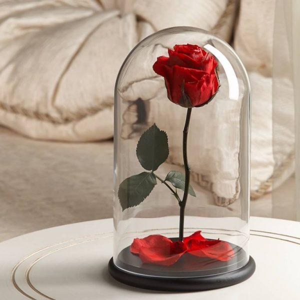 Роза в колбе «The Rose» Premium Classic Red