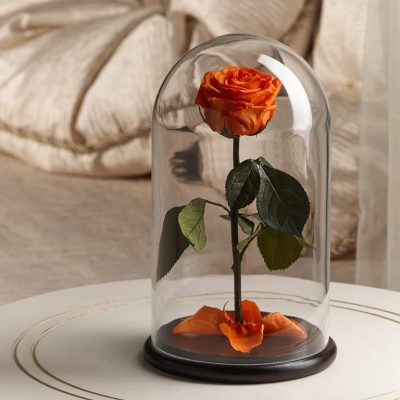 Роза в колбе «The Rose» Premium Light Orange
