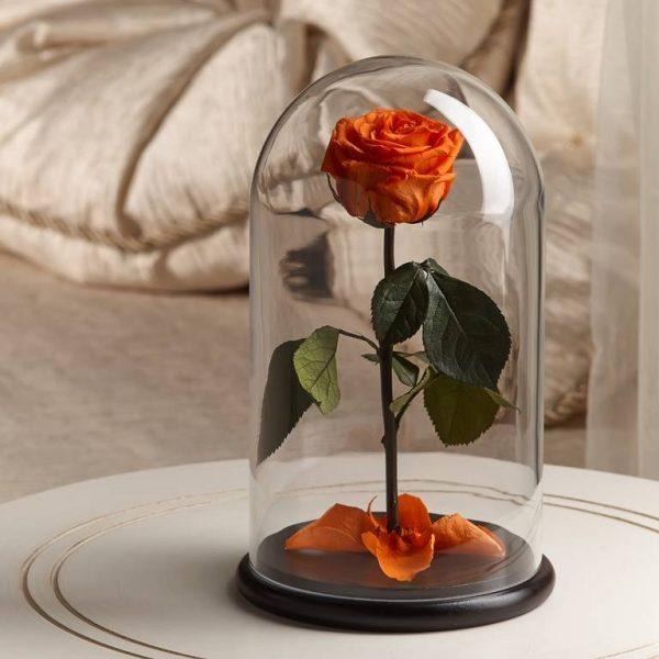Роза в колбе «The Rose» Premium Light Orange