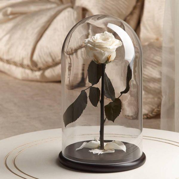 Роза в колбе «The Rose» Premium Perl White
