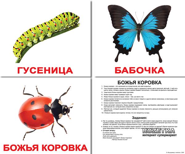 Набор карточек Домана Вундеркинд с пеленок «Насекомые» на русском языке