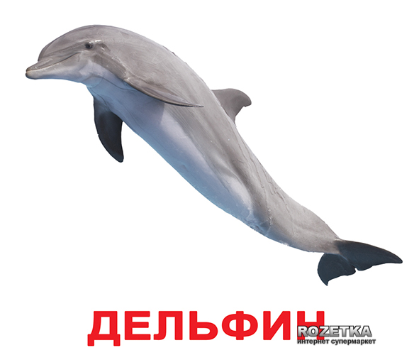 Карточки Домана Вундеркинд с пеленок «Обитатели воды» на русском языке