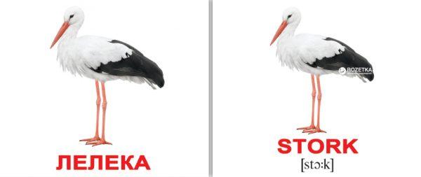 Карточки Домана Вундеркинд с пеленок «Птахи Birds» Міні-40