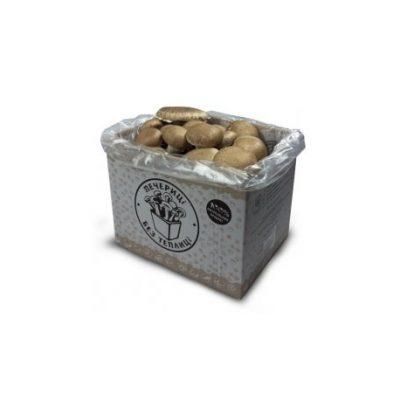 Грибная коробка для выращивания (шампиньонов королевских)