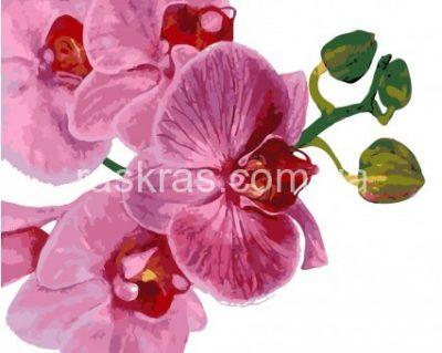 Картина раскраска «Розовая орхидея» ArtStory
