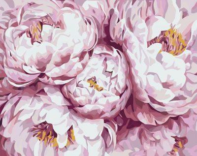 Картина по номерам «Нежно-розовые королевские пионы» Идейка