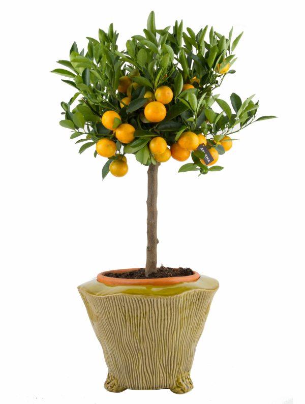 Композиция «Оранж»